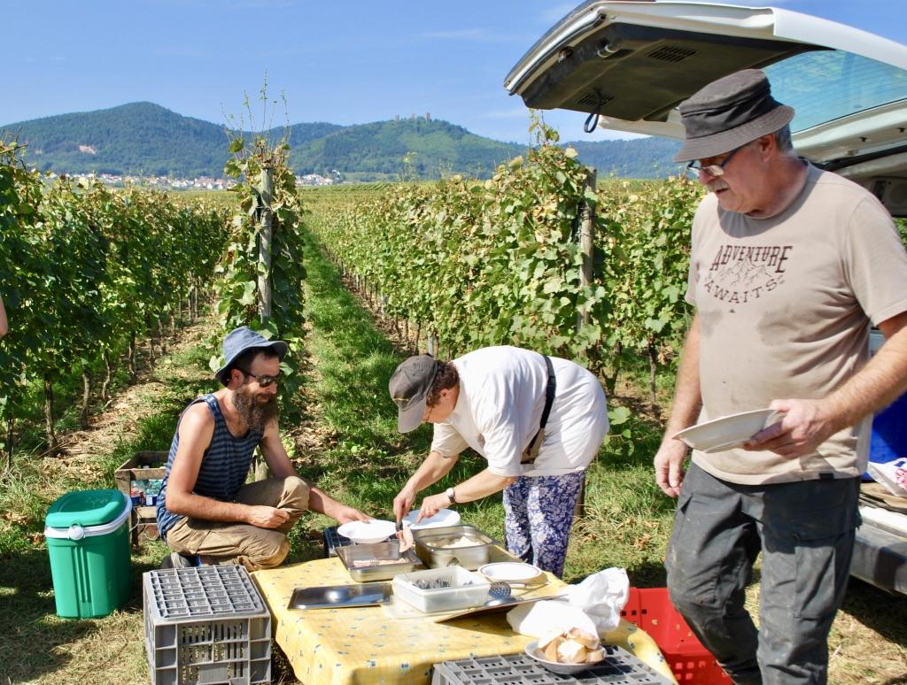 Moeder Baur deelt in de wijngaard lunch uit aan de plukkers