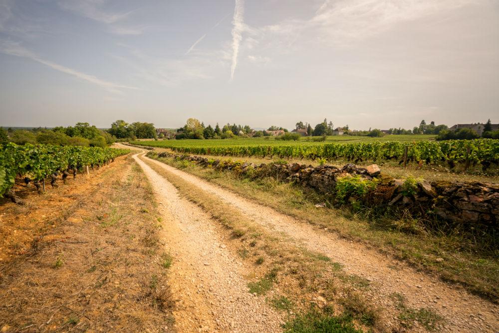 Landweg langs de wijngaard 'les grande vignes' bij Givry in de Bourgogne