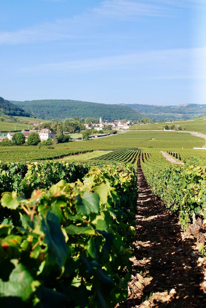 wijngaarden bij Meursault