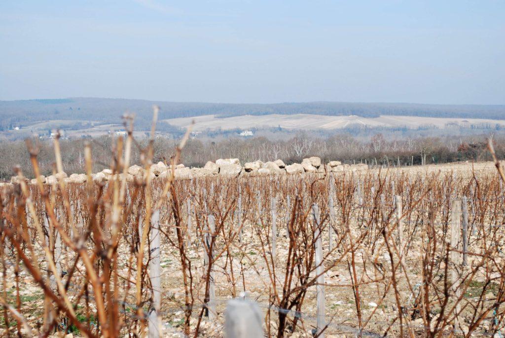 Pouilly Fumé, wijngaard La Roche met de uitgegraven rotsen op de achtergrond