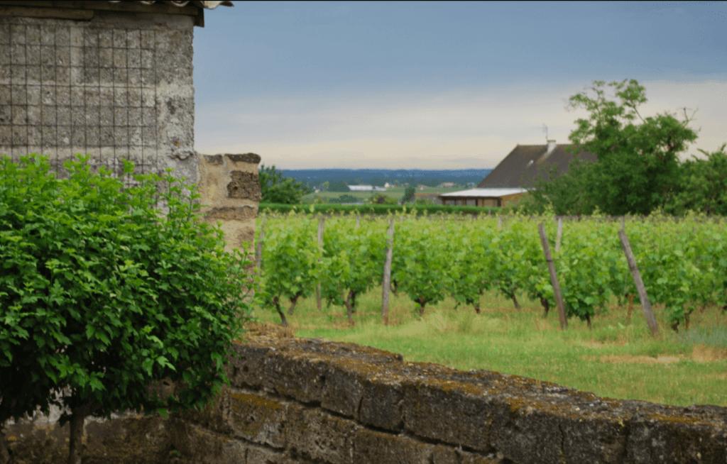 wijngaarden van domaine des Bleuces naast het huis