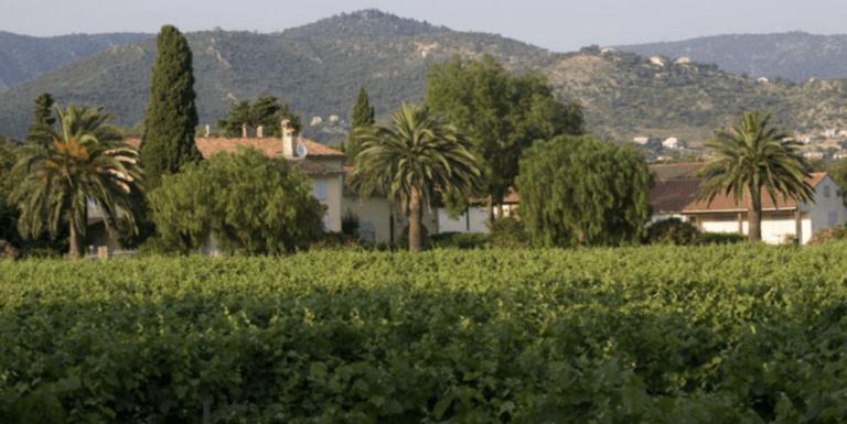 Château Angueiroun met op de voorgrond wijngaarden