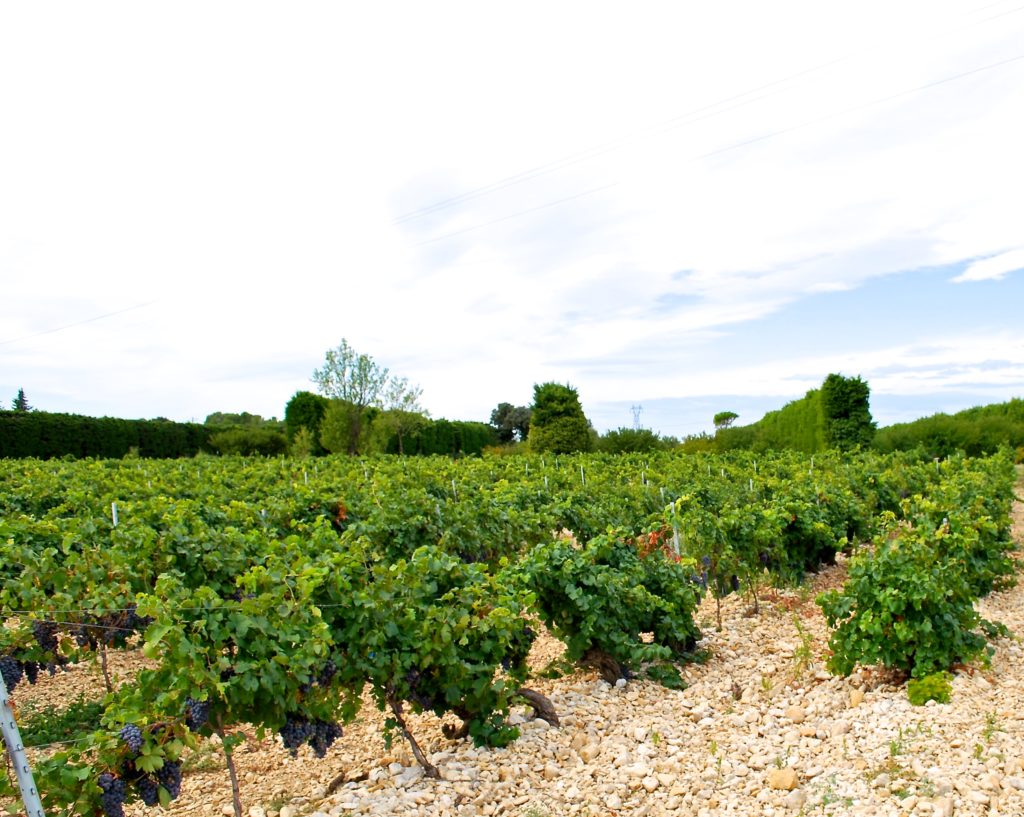 Een wijngaard van domaine de Chantegut