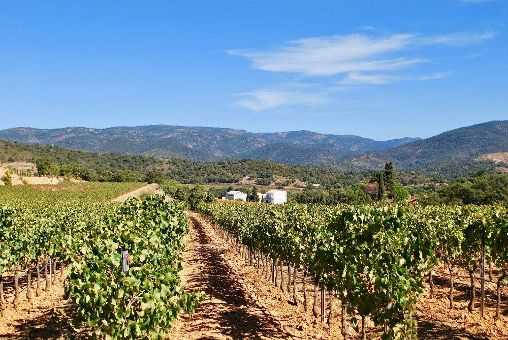 een wijngaard van Château Angueiroun