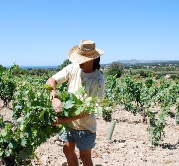 Guilhem Tournier in zijn wijngaard