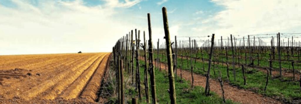 wijngaard en akkerbouw naast elkaar