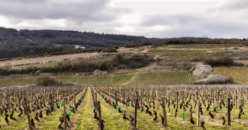 Saint Romain wijngaard domaine Nicolas