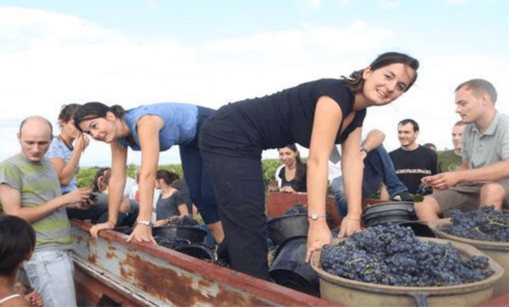 de filles van les filles de Septembre staan op de kar met geoogste druiven