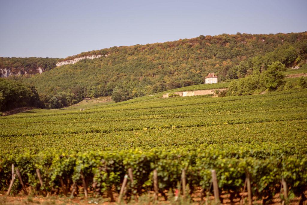 wijngaarden van domaine des Varoilles