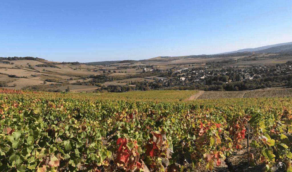 wijngaard in de herfst, domaine Nicolas