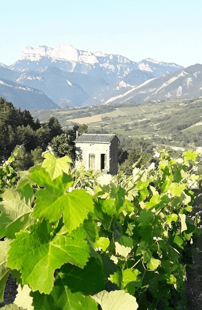 klein huisje in de wijngaard van domaine de Magord