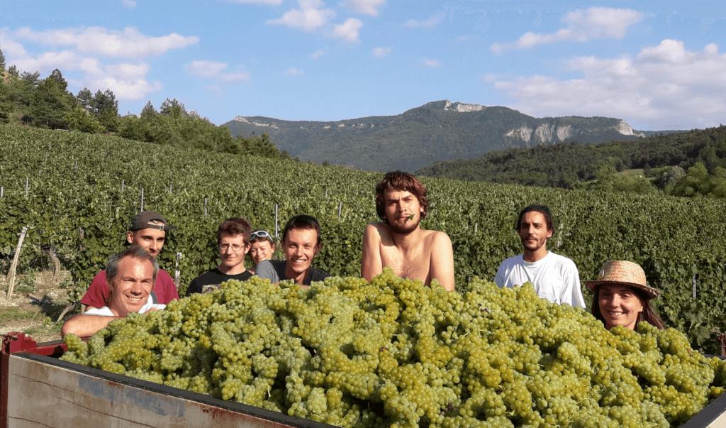 gelukkige plukkers tijdens de oogst van domaine de Magord