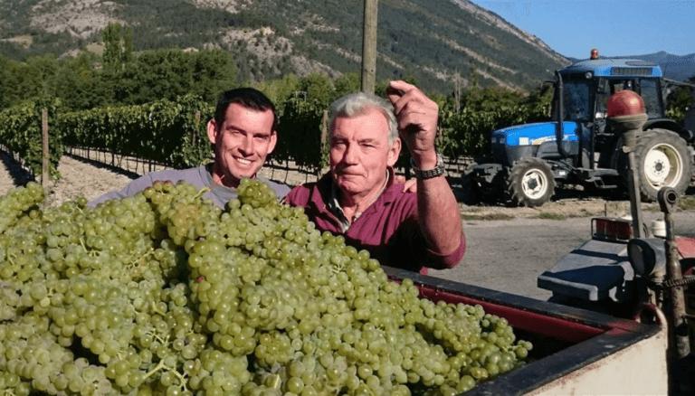 Zoon en Vader Vincent bij een aanhanger vol met geoogste druiven