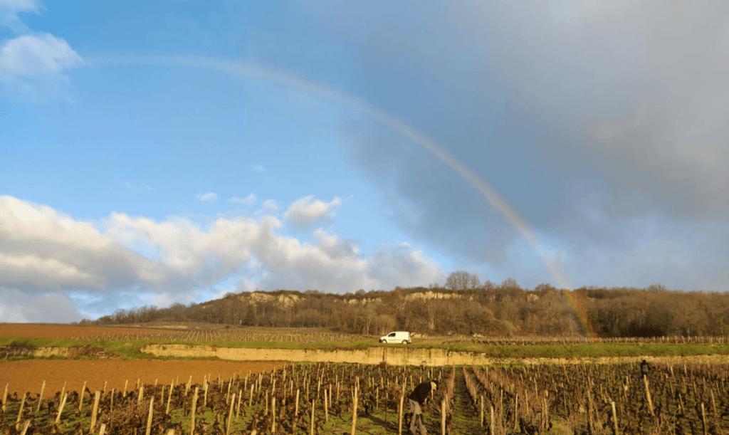 regenboog over de wijngaard van domaine Nicolas