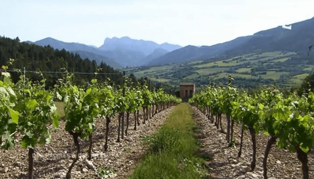 wijngaard van domaine de Magord
