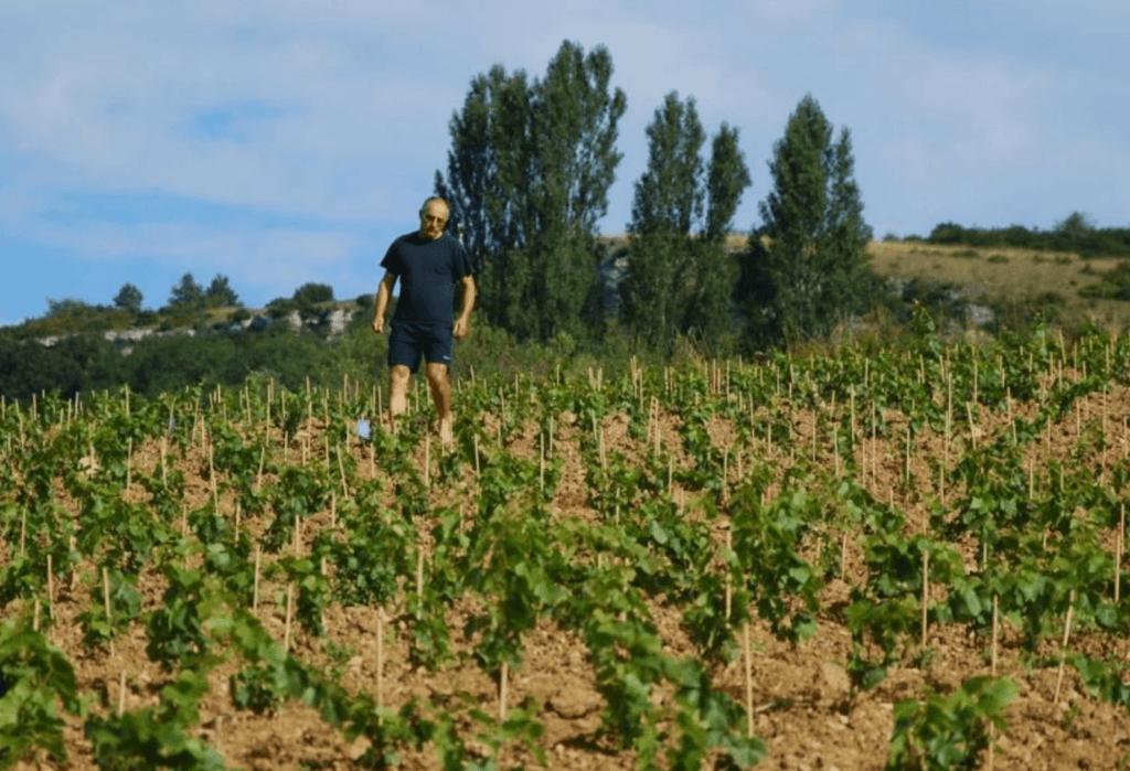 wijnboer in een wijngaard van domaine Nicolas