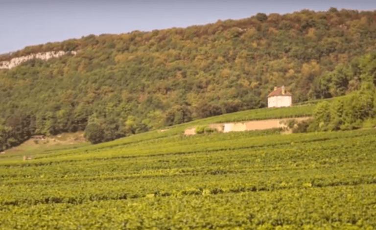 wit huisje in de wijngaarden van domain des Varoilles