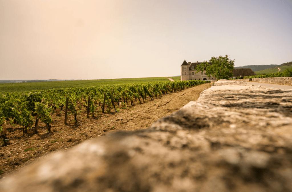 Clos de Vougeot en de wijngaarden