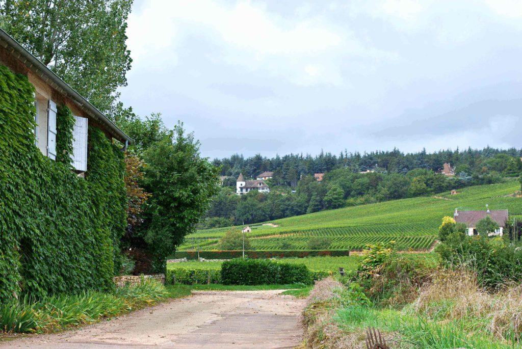 domaine Parize met de wijngaarden op de achtergrond