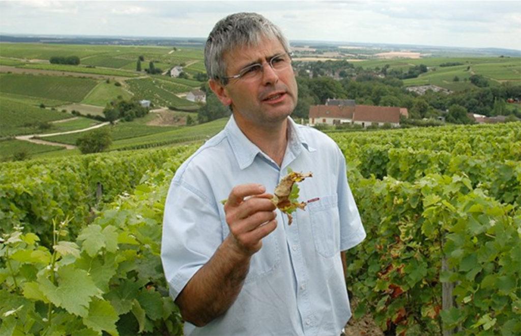 Dodminique Roger van domaine du Carrou in zijn wijngaard