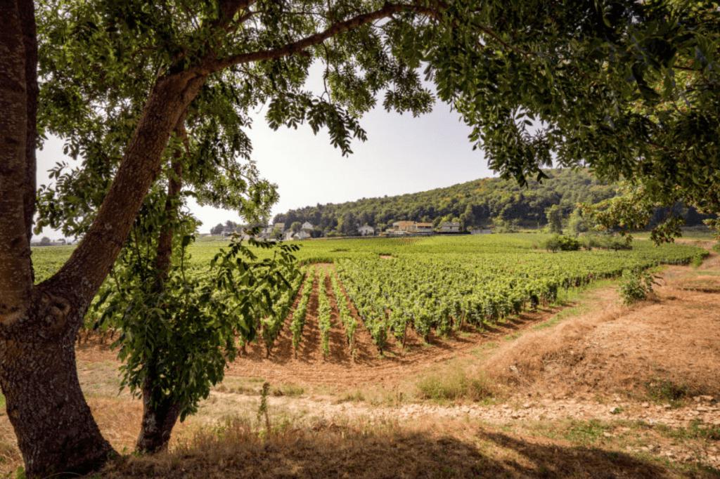 doorkijk naar de wijngaarden