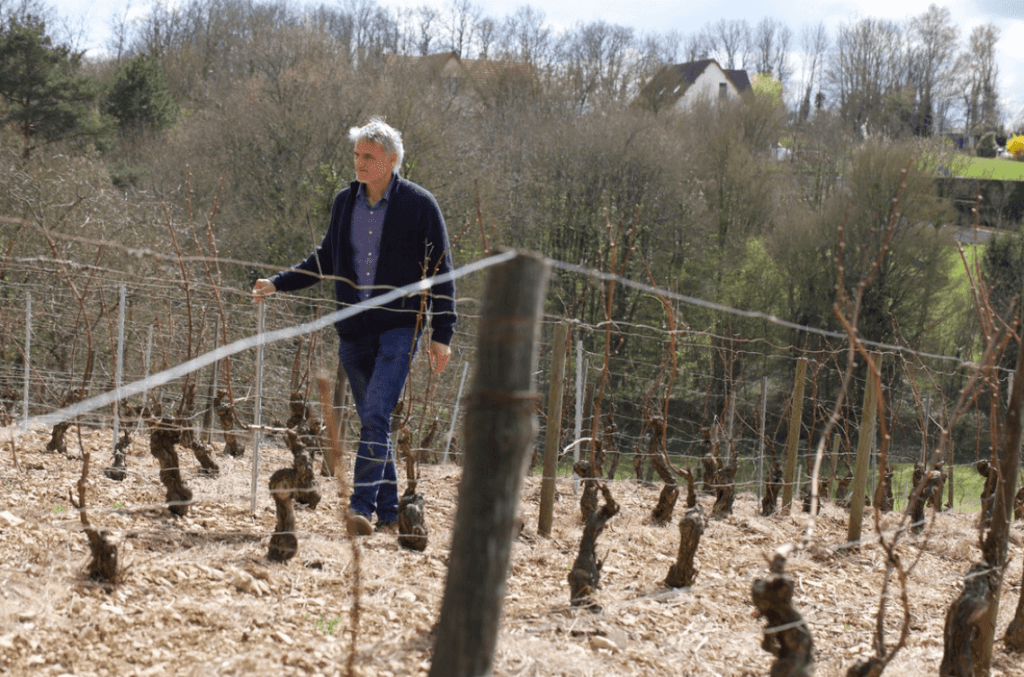 Emannuel Dampt wandelt in een winterse wijngaard