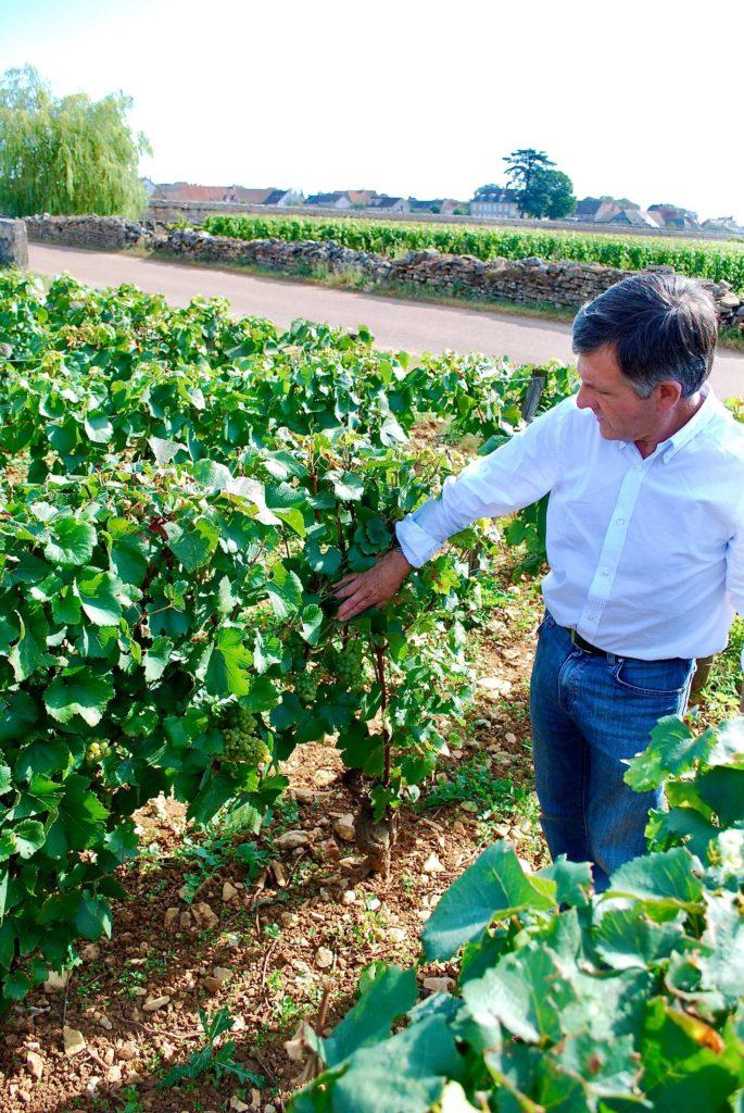 Jean Michel Gaunoux in zijn wijngaard