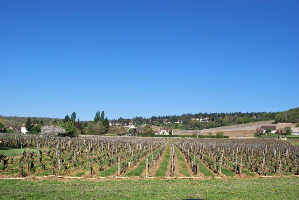 les grandes vignes van domaine Parize