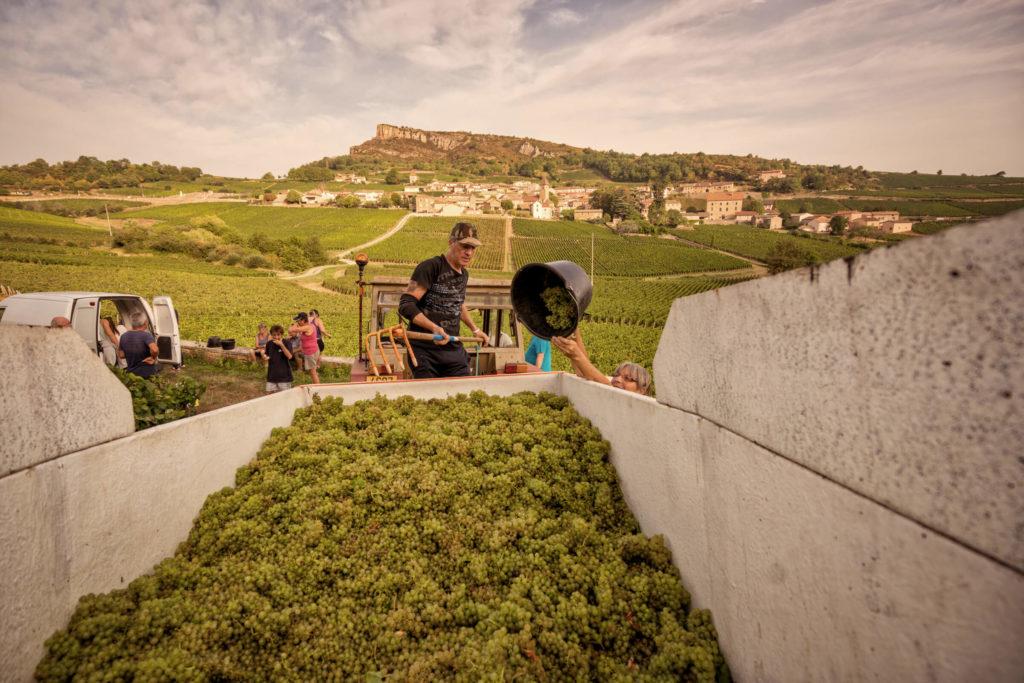 Druivenplukkers aan het werk tijdens de oogst van Château Vergisson