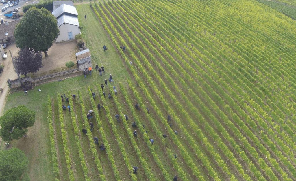 druivenplukkers aan het werk voor domaine des Bleuces, gezien vanuit de lucht