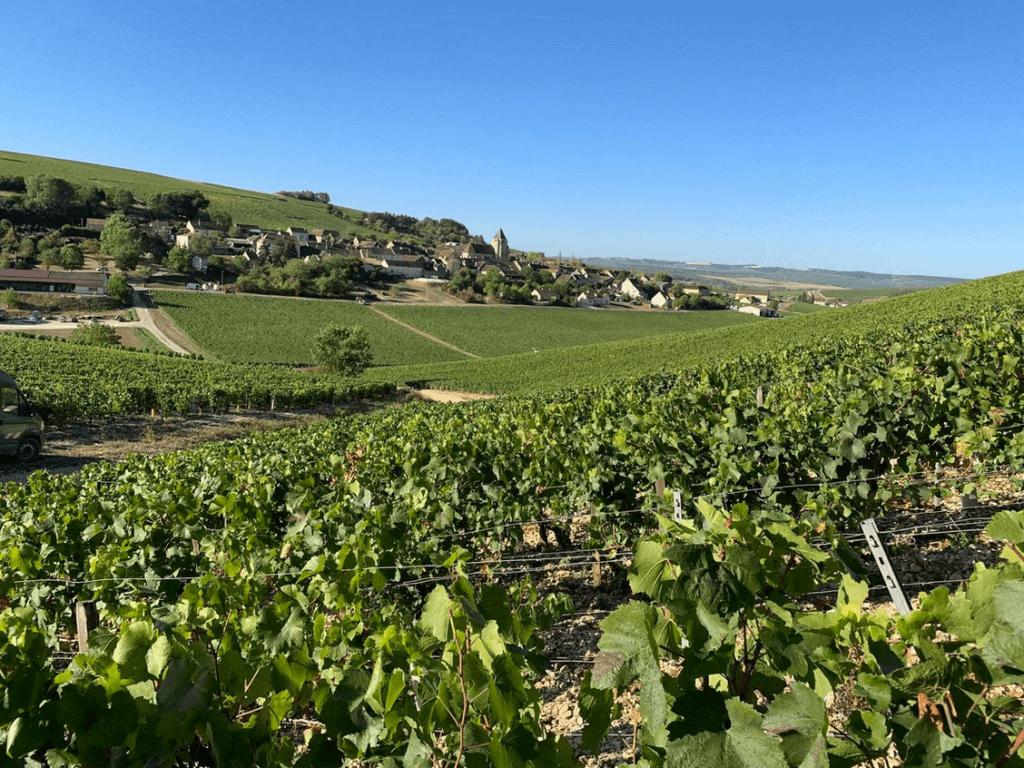 wijngaarden van de gebroeders Dampt