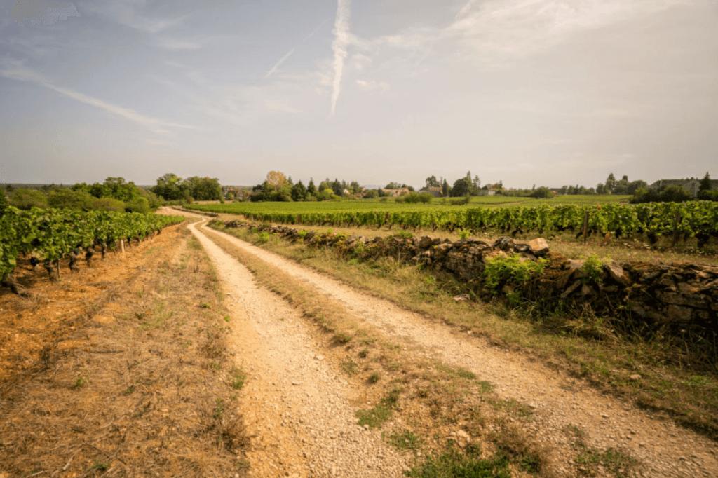 landweg door de wijngaarden
