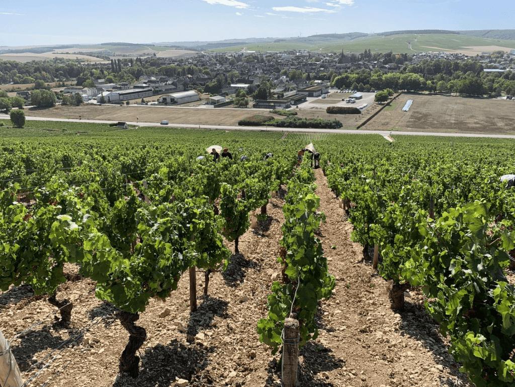 plukkers in de wijngaarden van de gebroeders Dampt