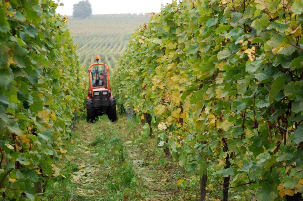 Tractor in de wijngaard