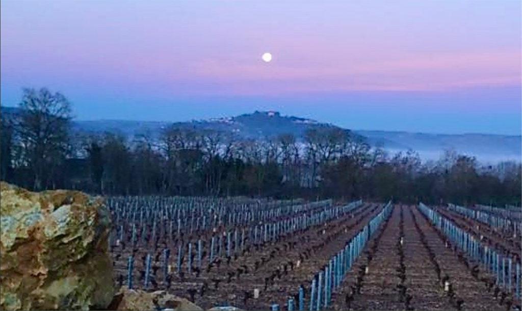 winterse wijngaard van Alain Cailbourdin