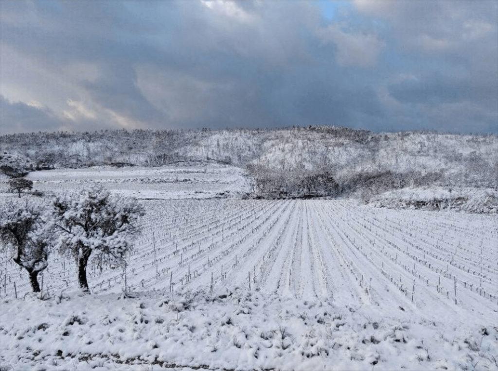 Provencaalse wijngaarden in de sneeuw