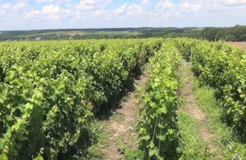wijngaarden op het plateau bij Pouillé in de Touraine