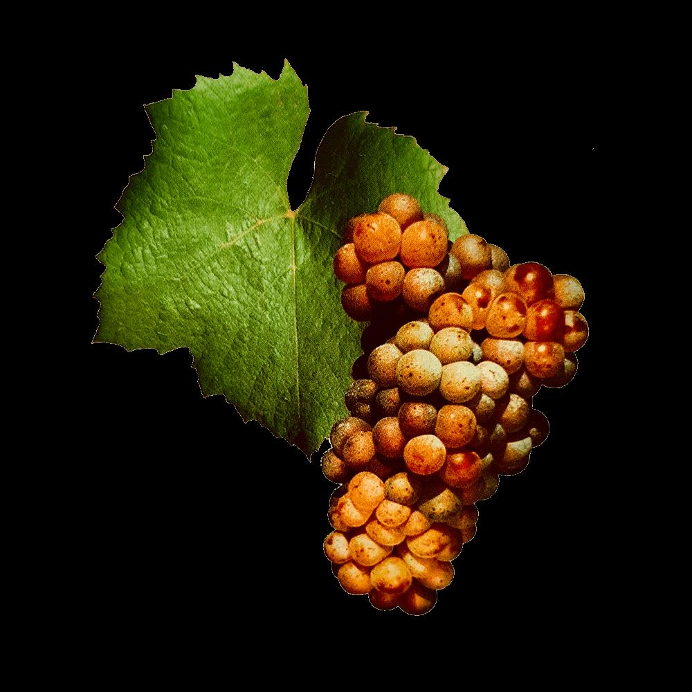 De Melon druif