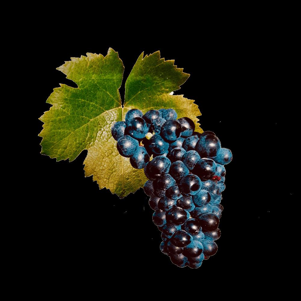 De Negrette druif