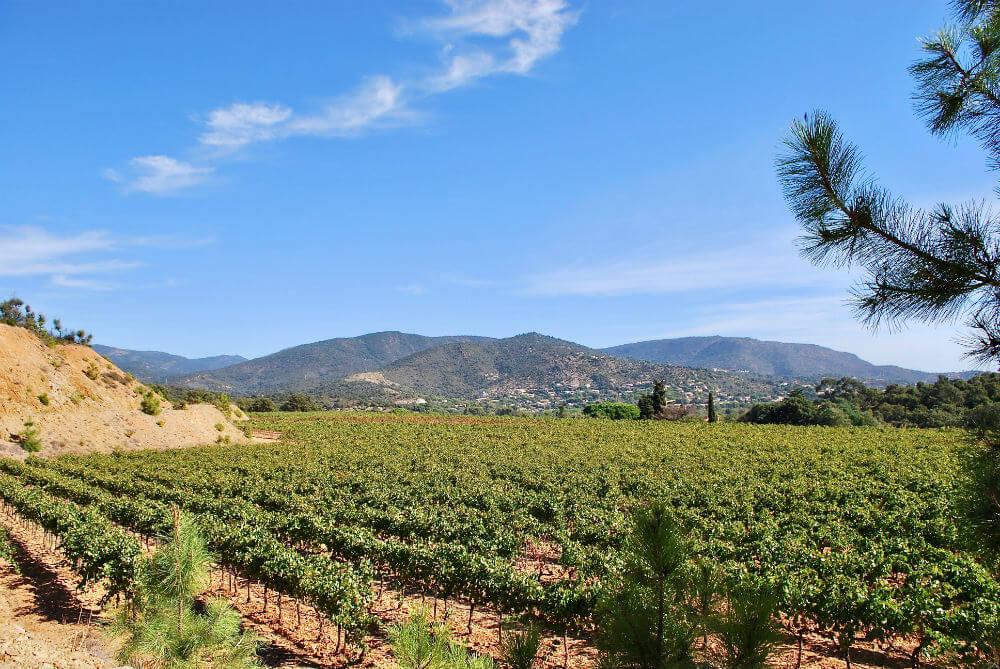 Wijngaarden in de kom van de vallei van Château Angeurioun