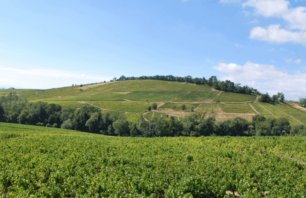 Mont Brouilly in de Beaujolais