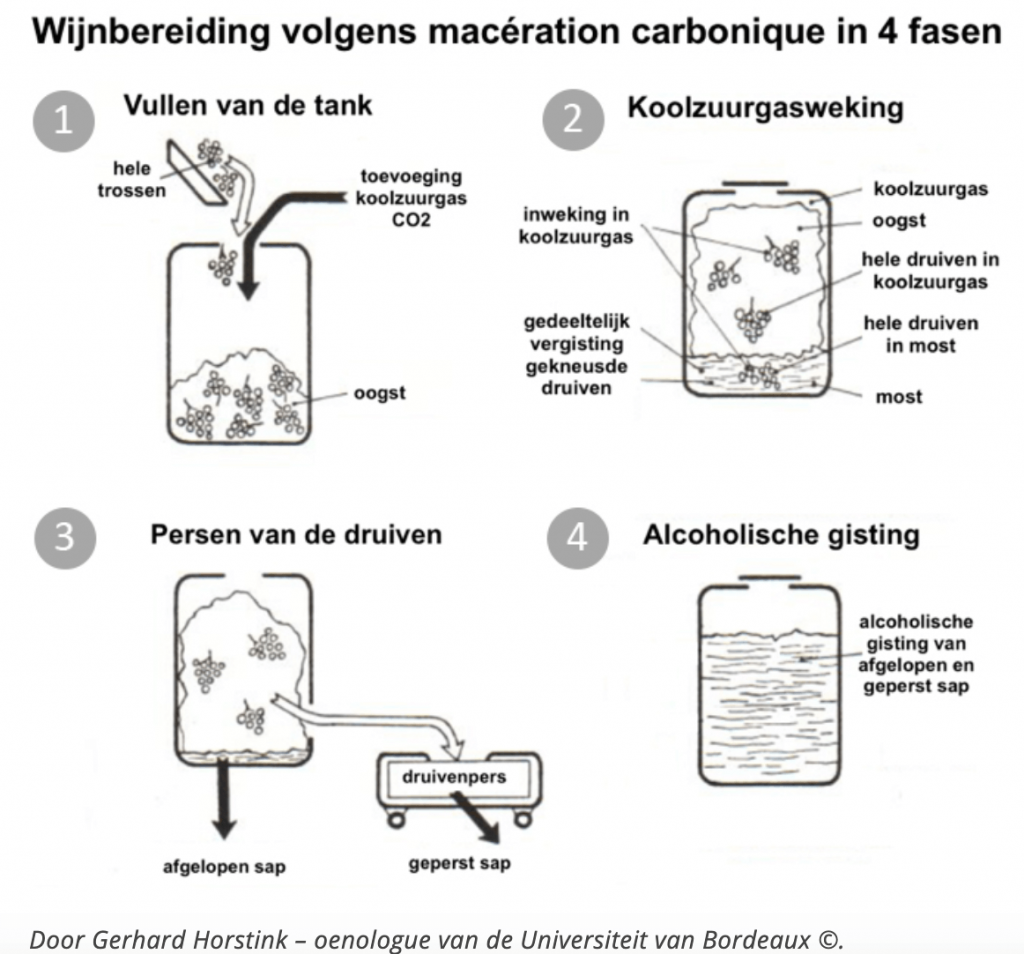Het proces van de maceration carbonique